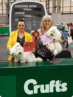 Stevie Clemo Coton de Tulear Breeder - success at Crufts